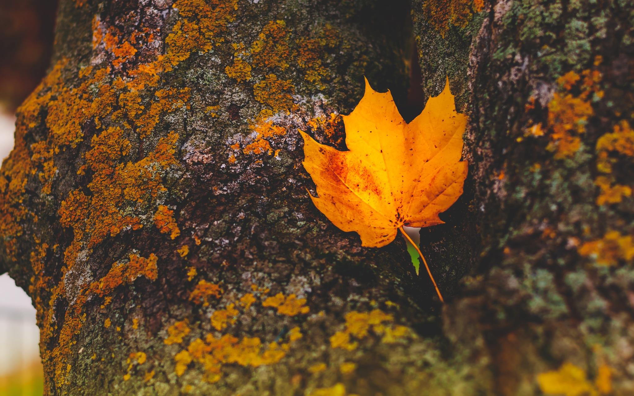 Golden Polish autumn #2 by Rafał Wyzina