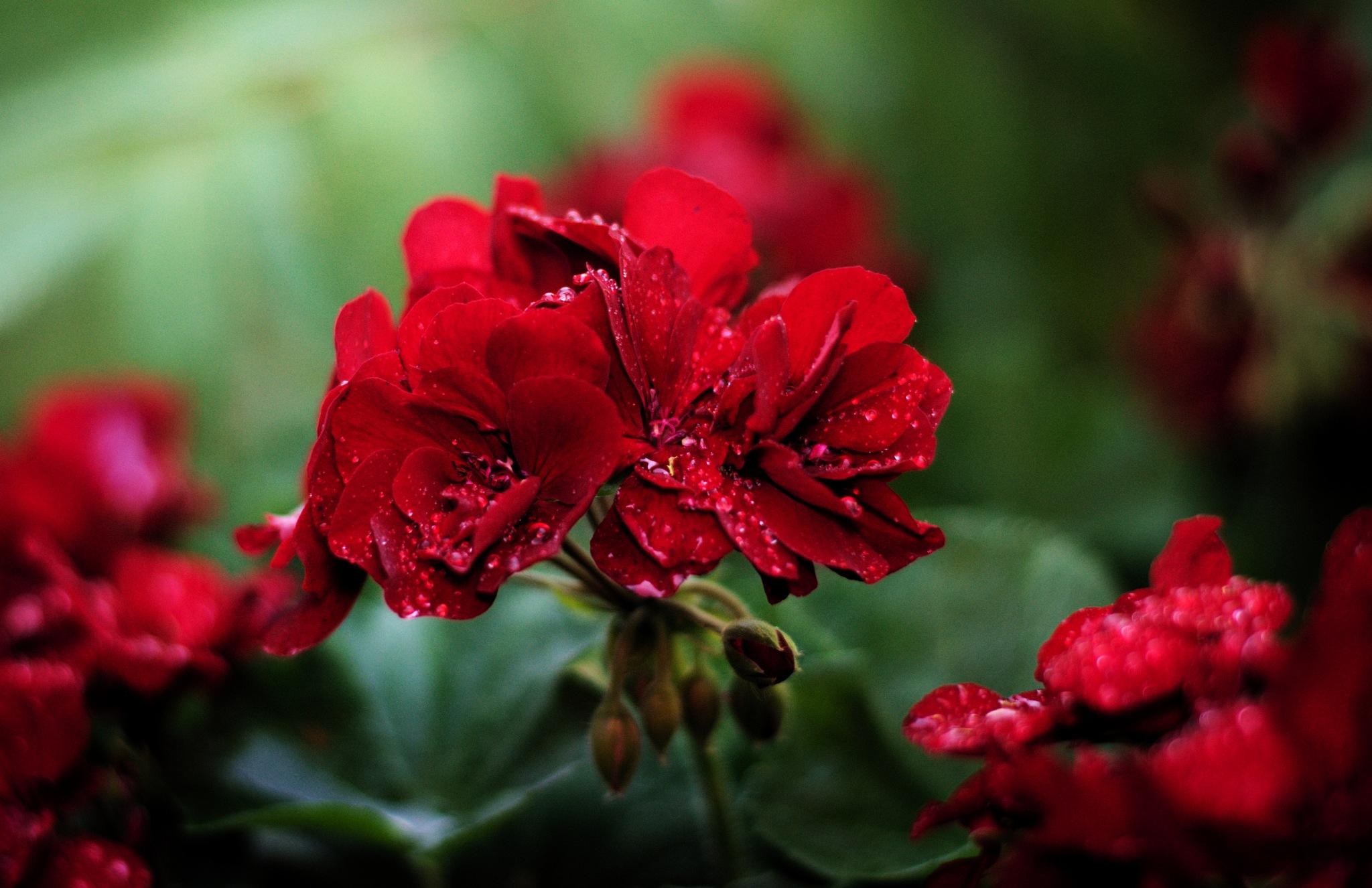 Flower #2 by Rafał Wyzina