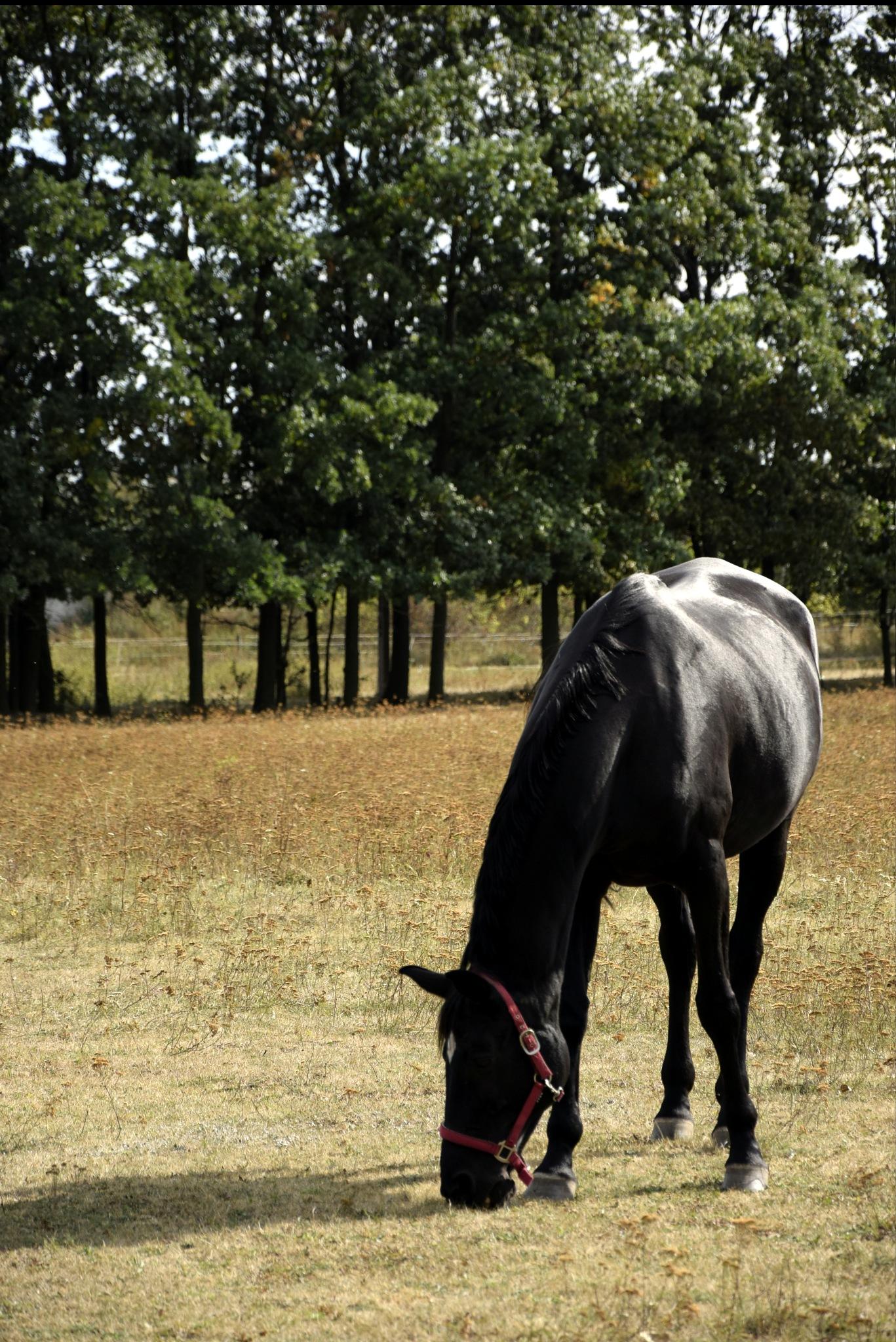 Horse by Rafał Wyzina
