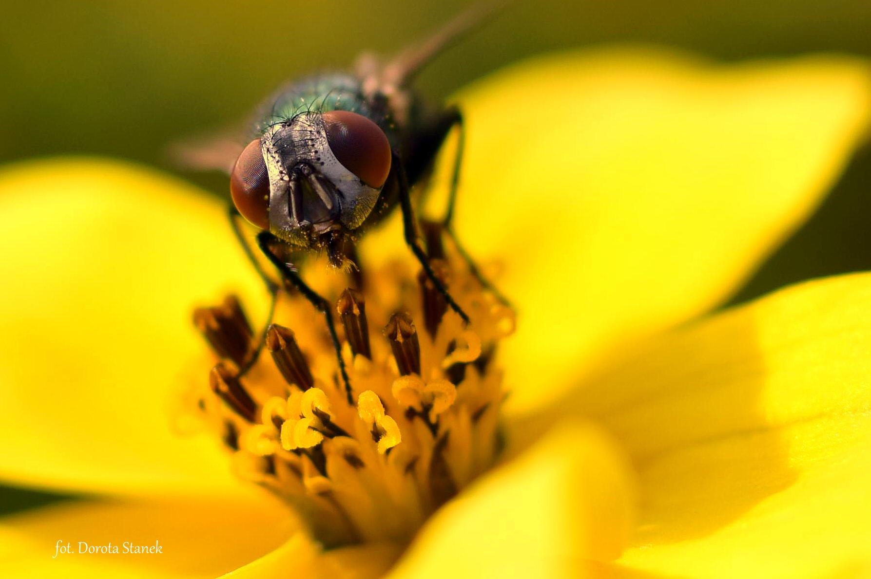 fly by Dorota Stanek