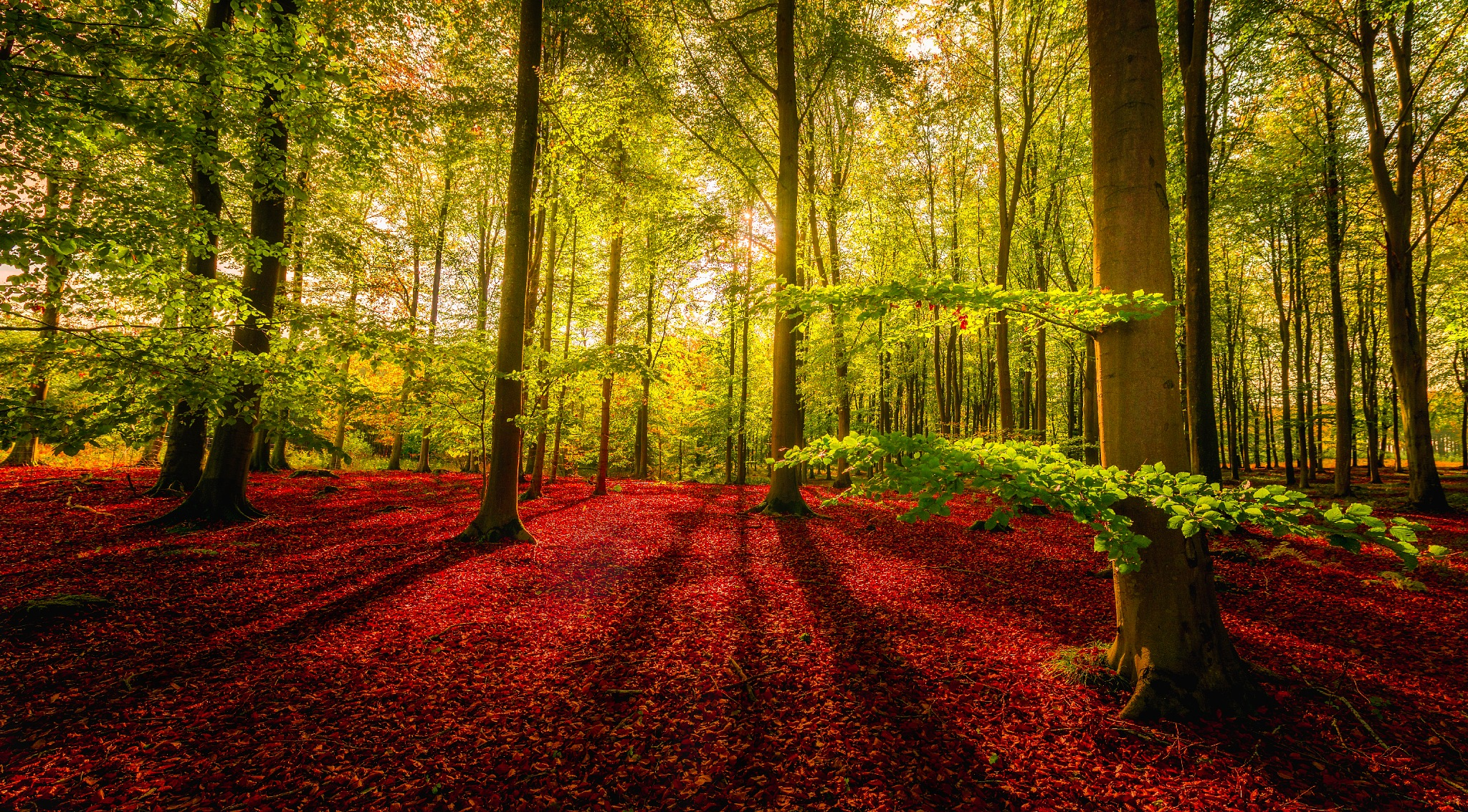 Afternoon light at local forest by Ermedin Islamcevic