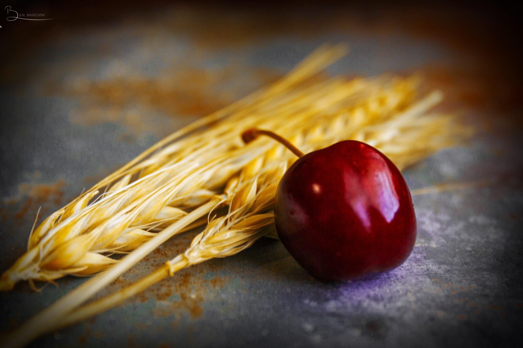 cherries and Wheat spike by Bilalbahacham