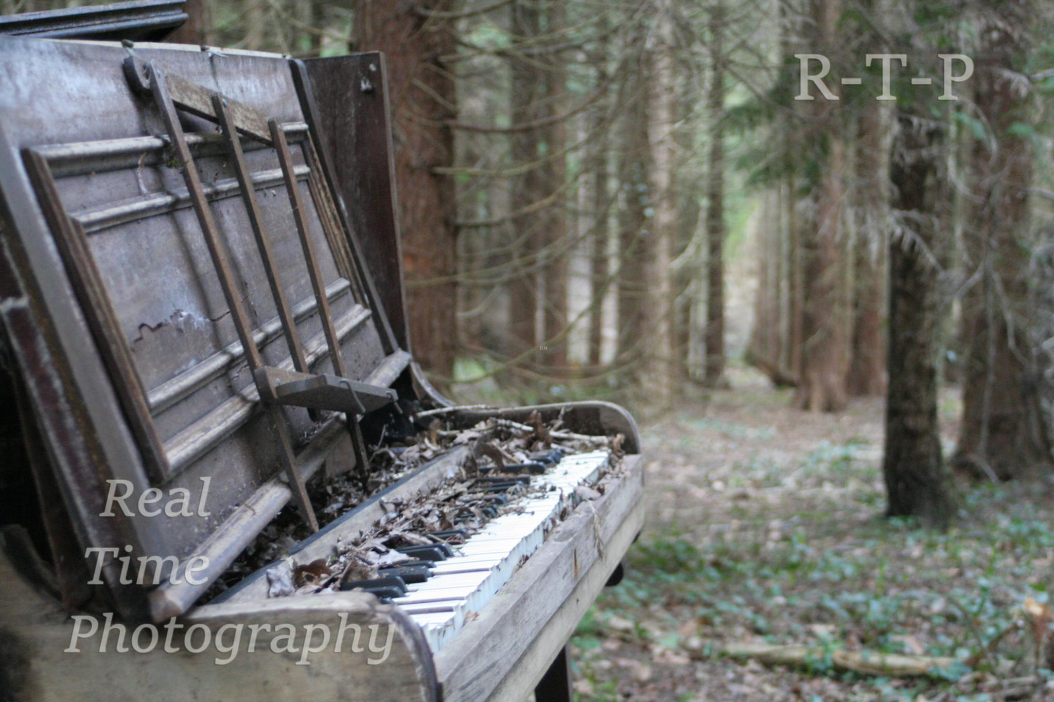 Piano in the woods by Daryl Marlow