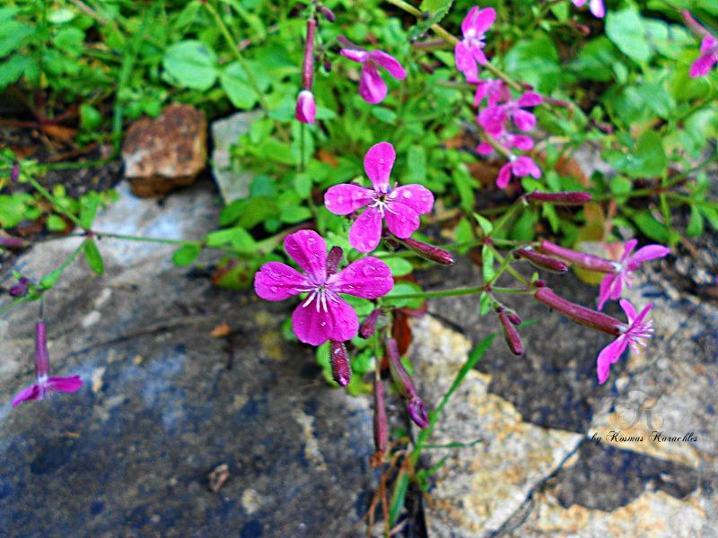 wildflowers by kxkosmas