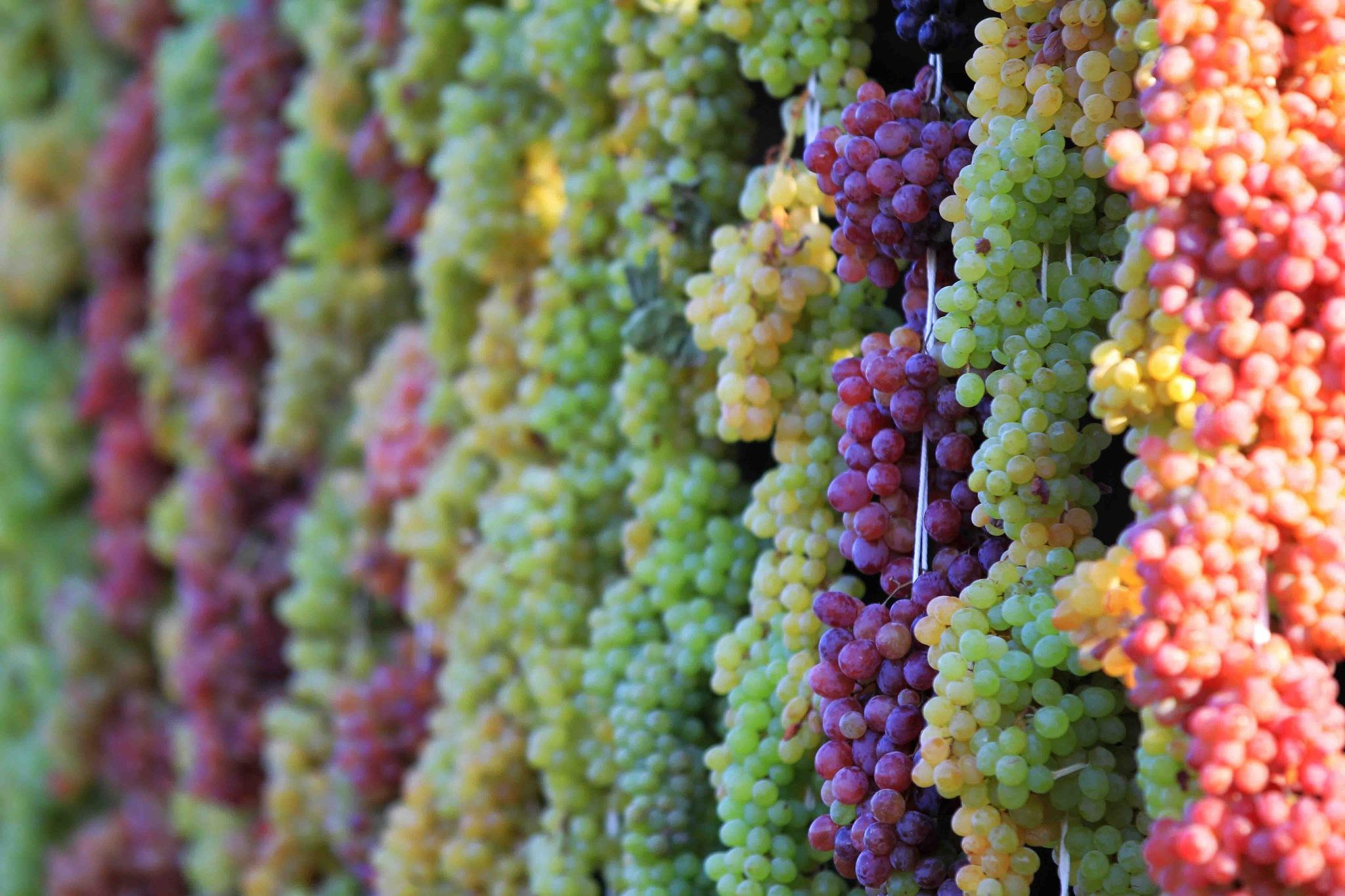 رنگین کمان انگور by kavoshihs