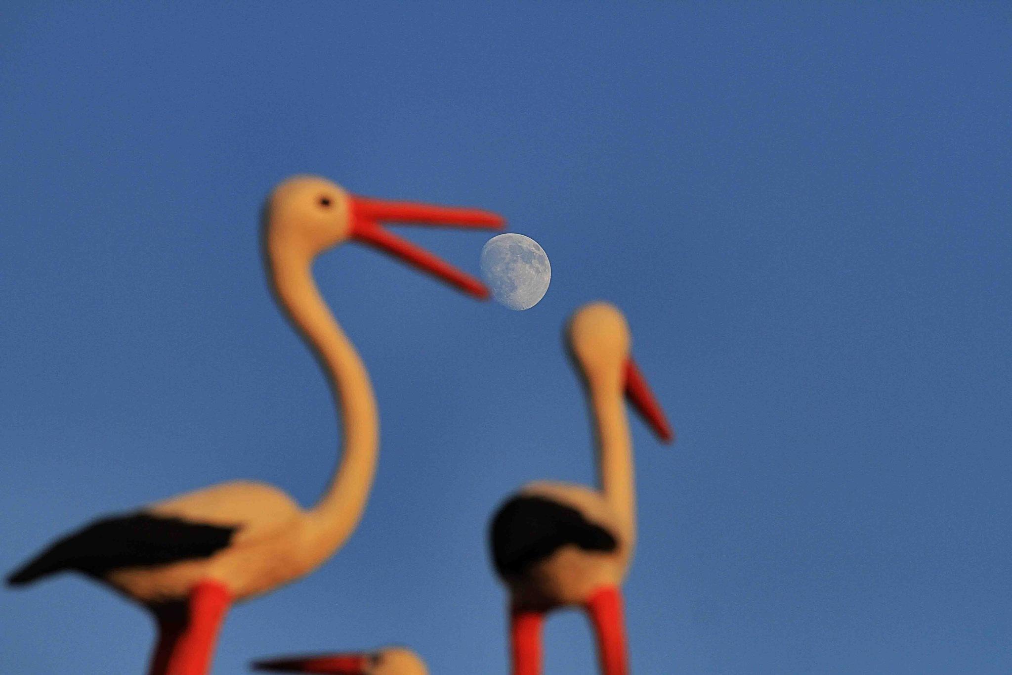 ماه در دهان by kavoshihs