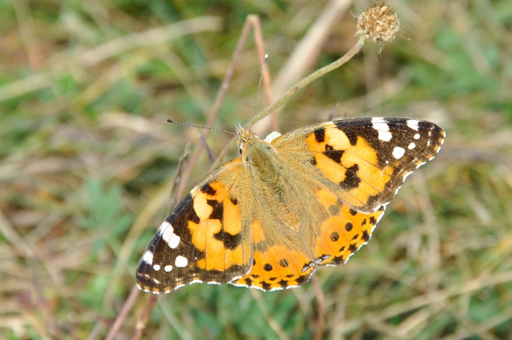 Butterfly by OneRandomFotographer