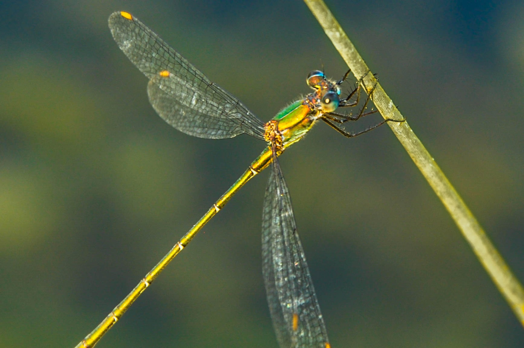 Dragonfly 2 by OneRandomFotographer