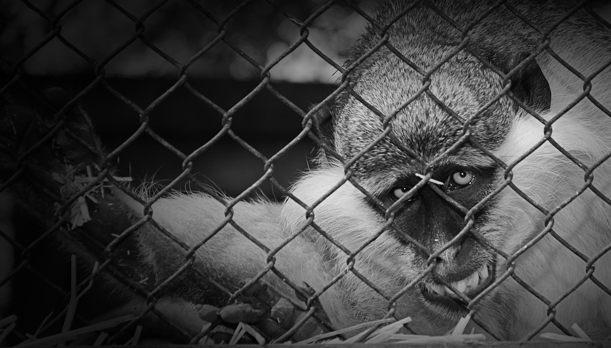 Anger monkeys by Mohamed Mahdy