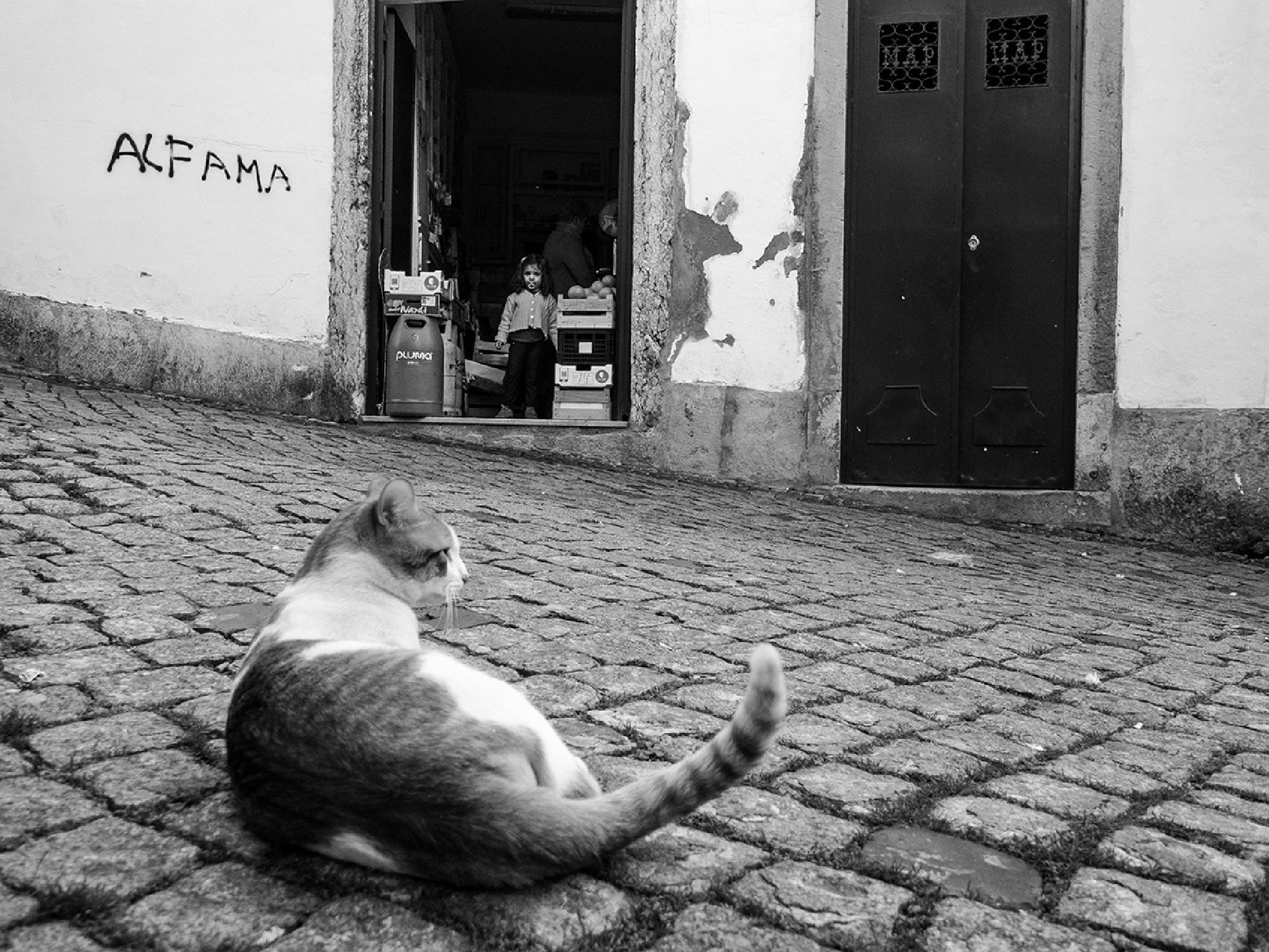 The cat by Arnaud BROSSARD