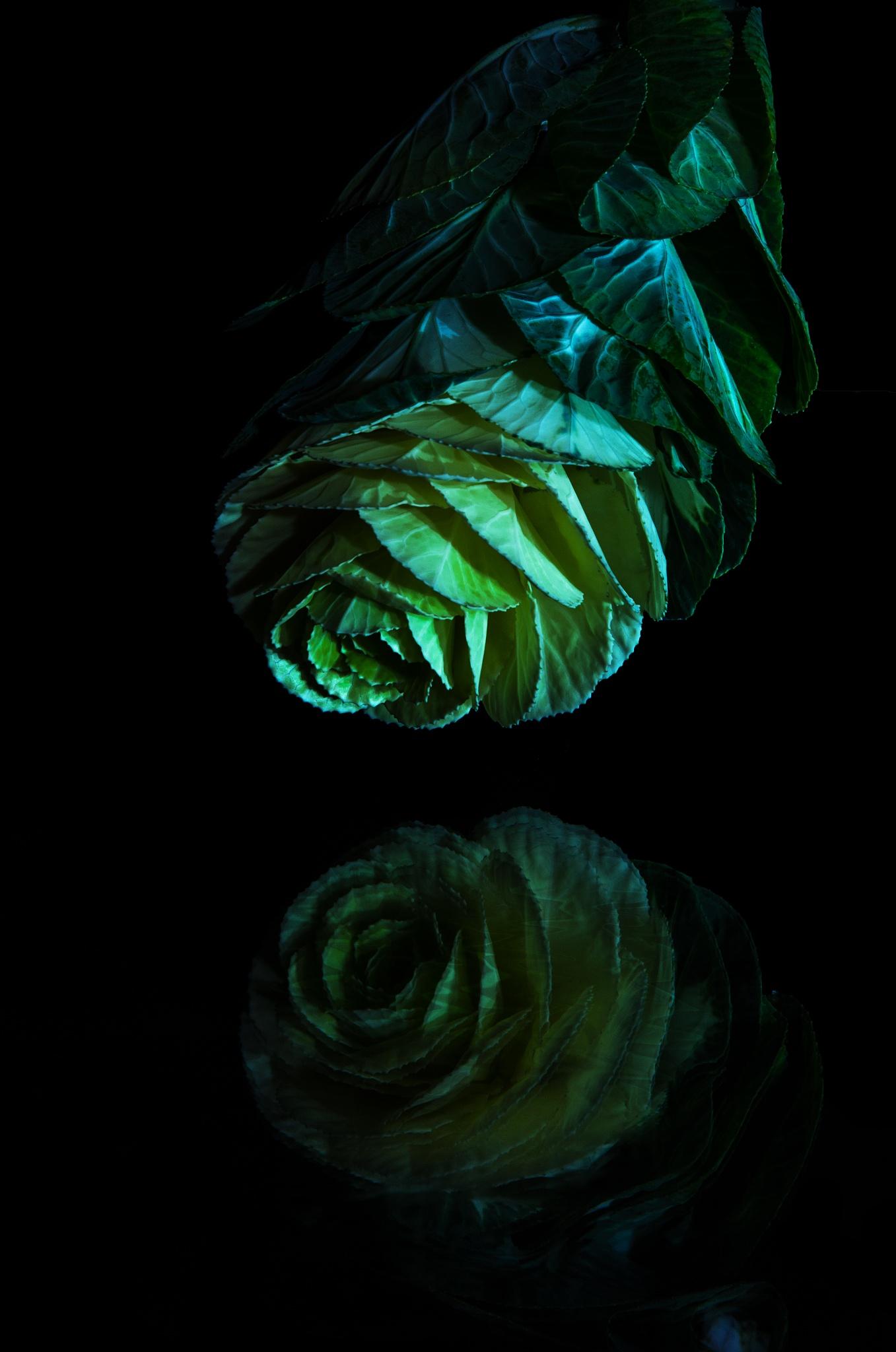 Brassica by EmanueleZ