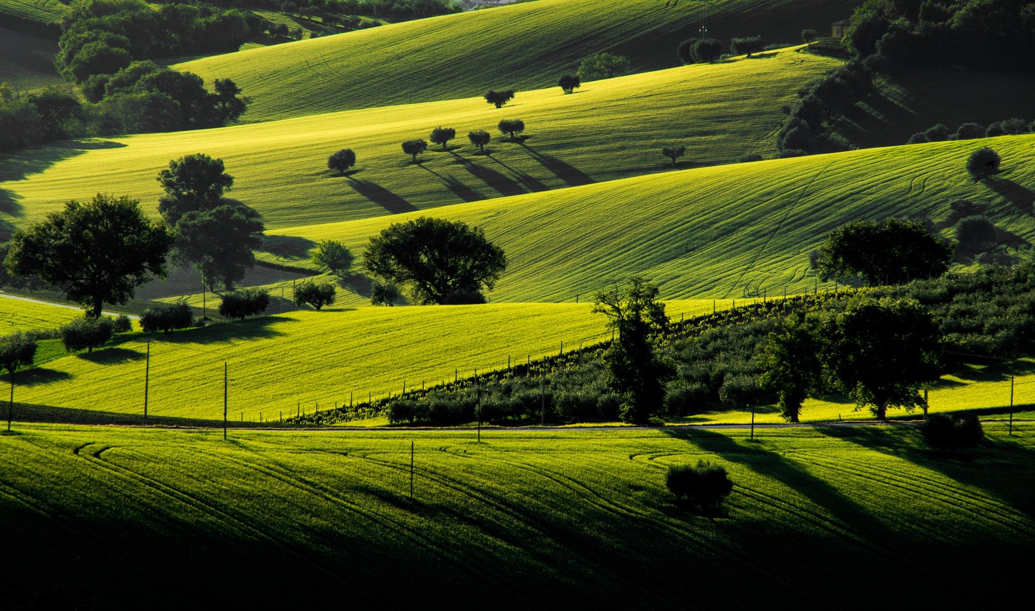 Italian Green hills by EmanueleZ