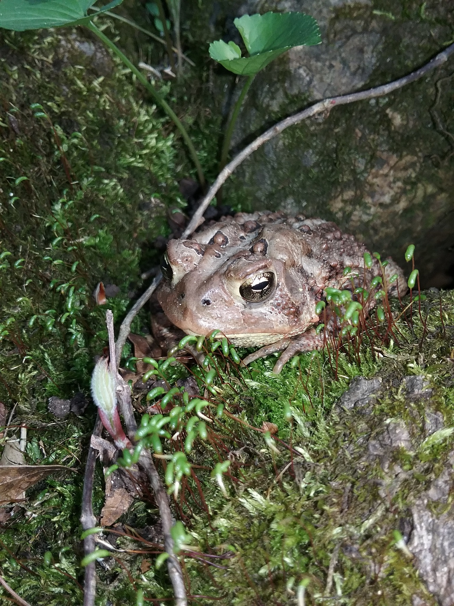 Toad by Anna Bailey