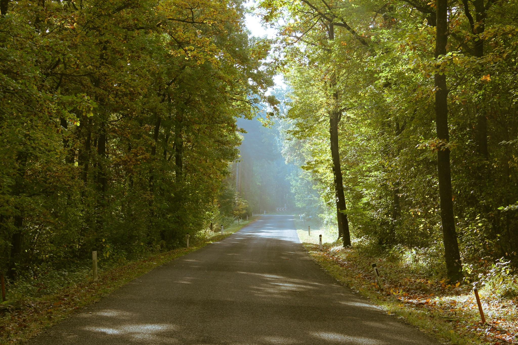 Herbst by Bettina Herz