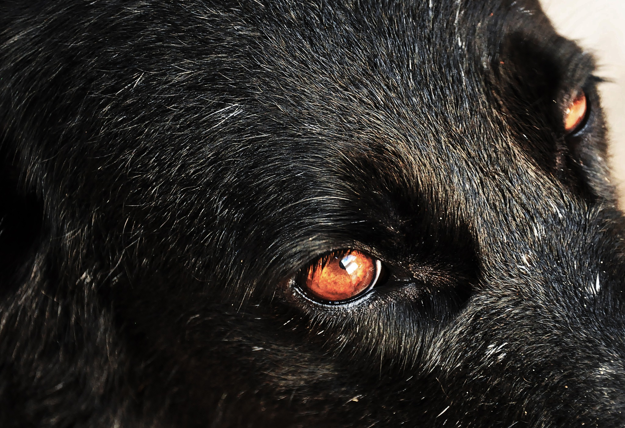 Fufuca's dog eyes! by Chico Vecchia