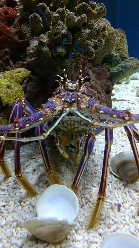 Aquarium!!!!! by Sara_Elizabeth