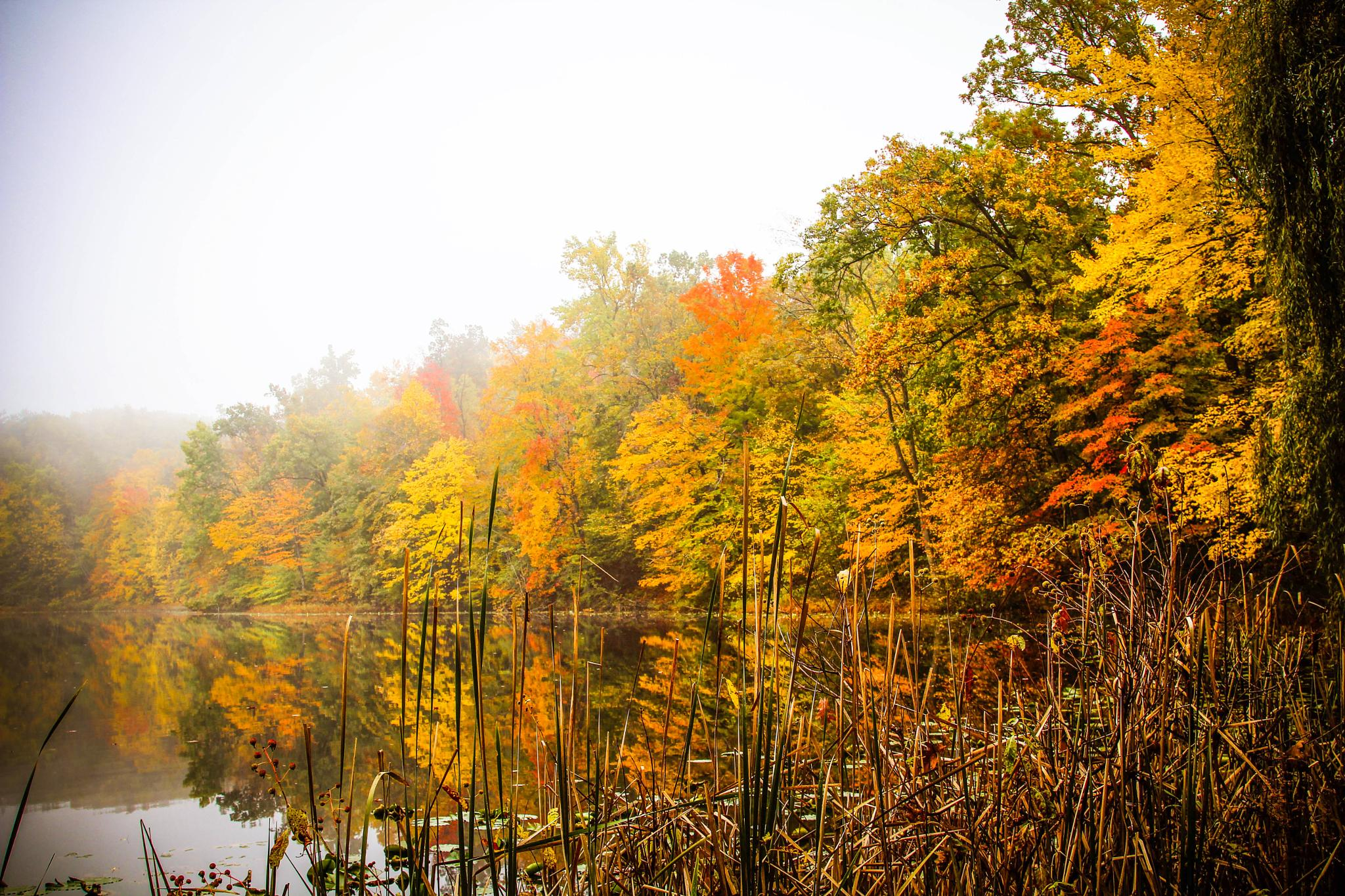 Photo in Landscape #lake #fishing #michigan #fog #fall #color #tree #maple #reflection #beautiful #canon #landscape #nature #water #waterscape #foggy
