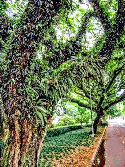 Tree  by Sonja