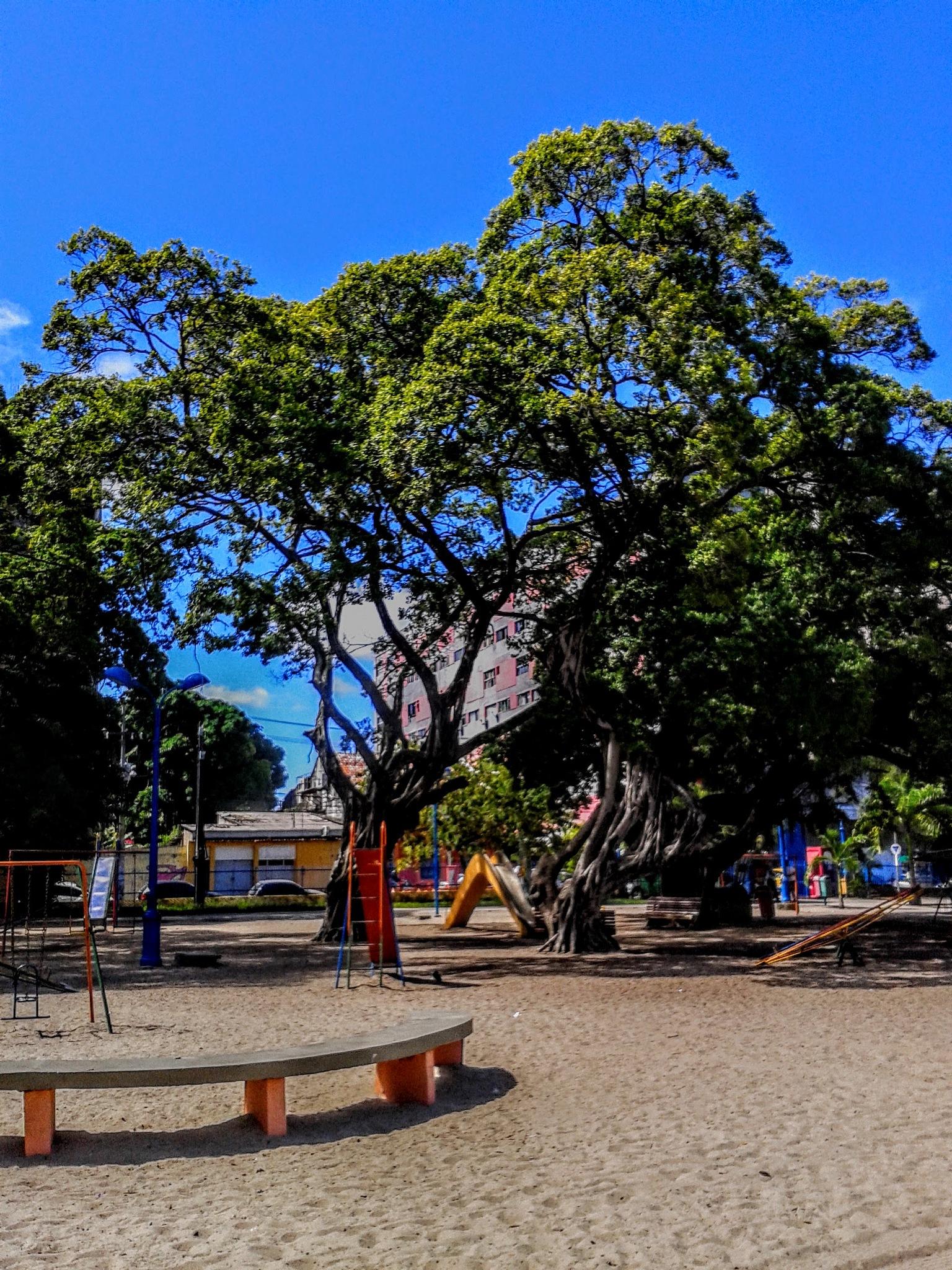 Parque 13 de maio  by Sonja