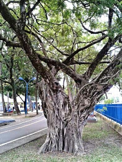 """Árvore """"mãe"""" by Sonja"""
