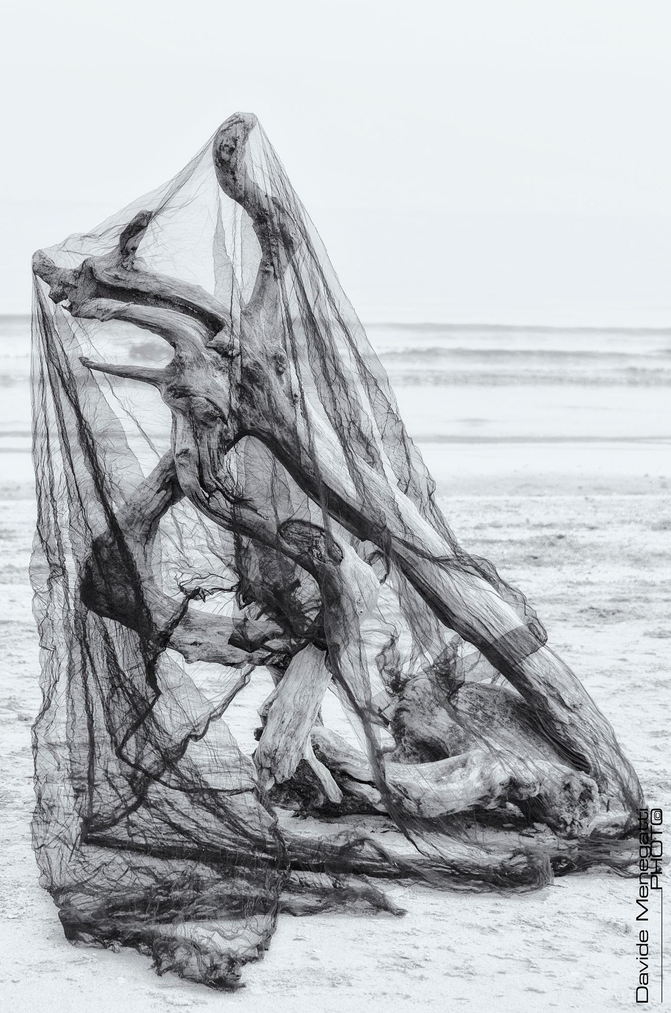 The Black Widow by Davide Menegatti