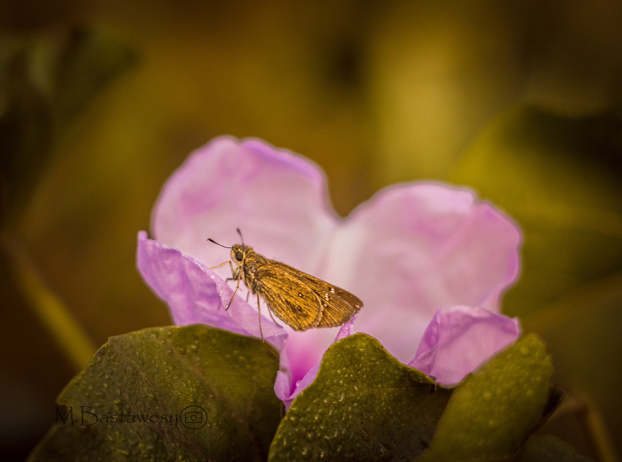 Macro photography  by Mohamed AKAB