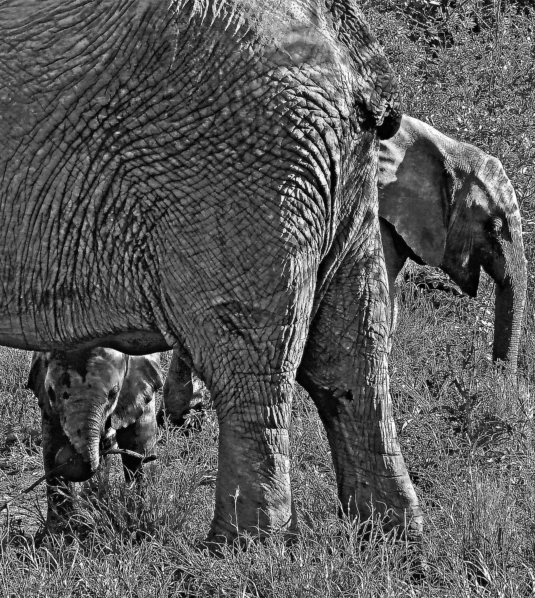 Mum & Big Sis by PeterMChambers