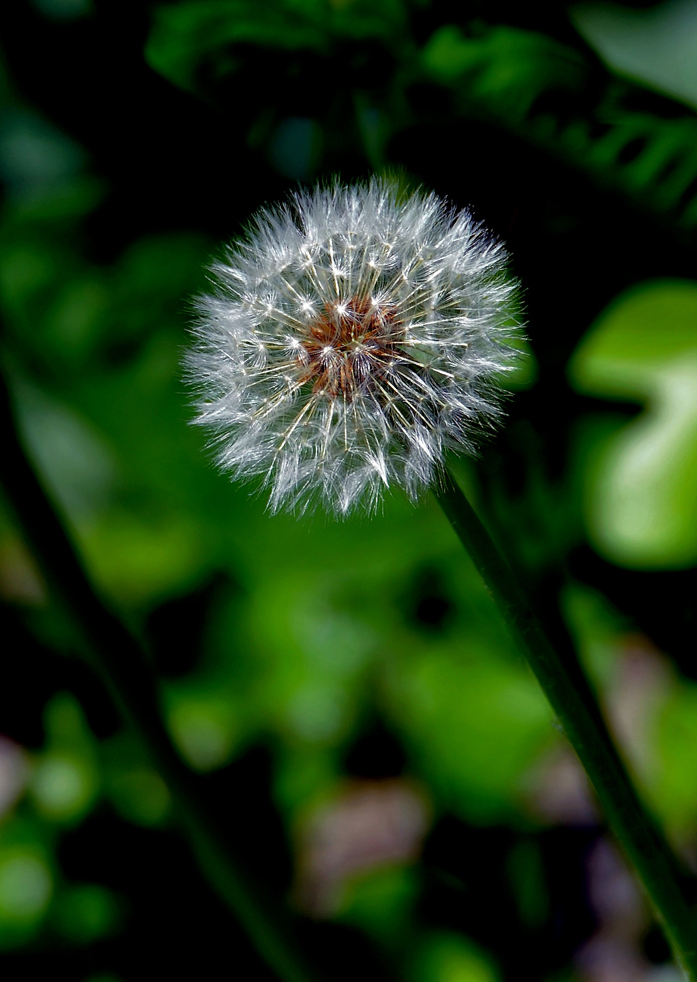 Just Dandy by PeterMChambers