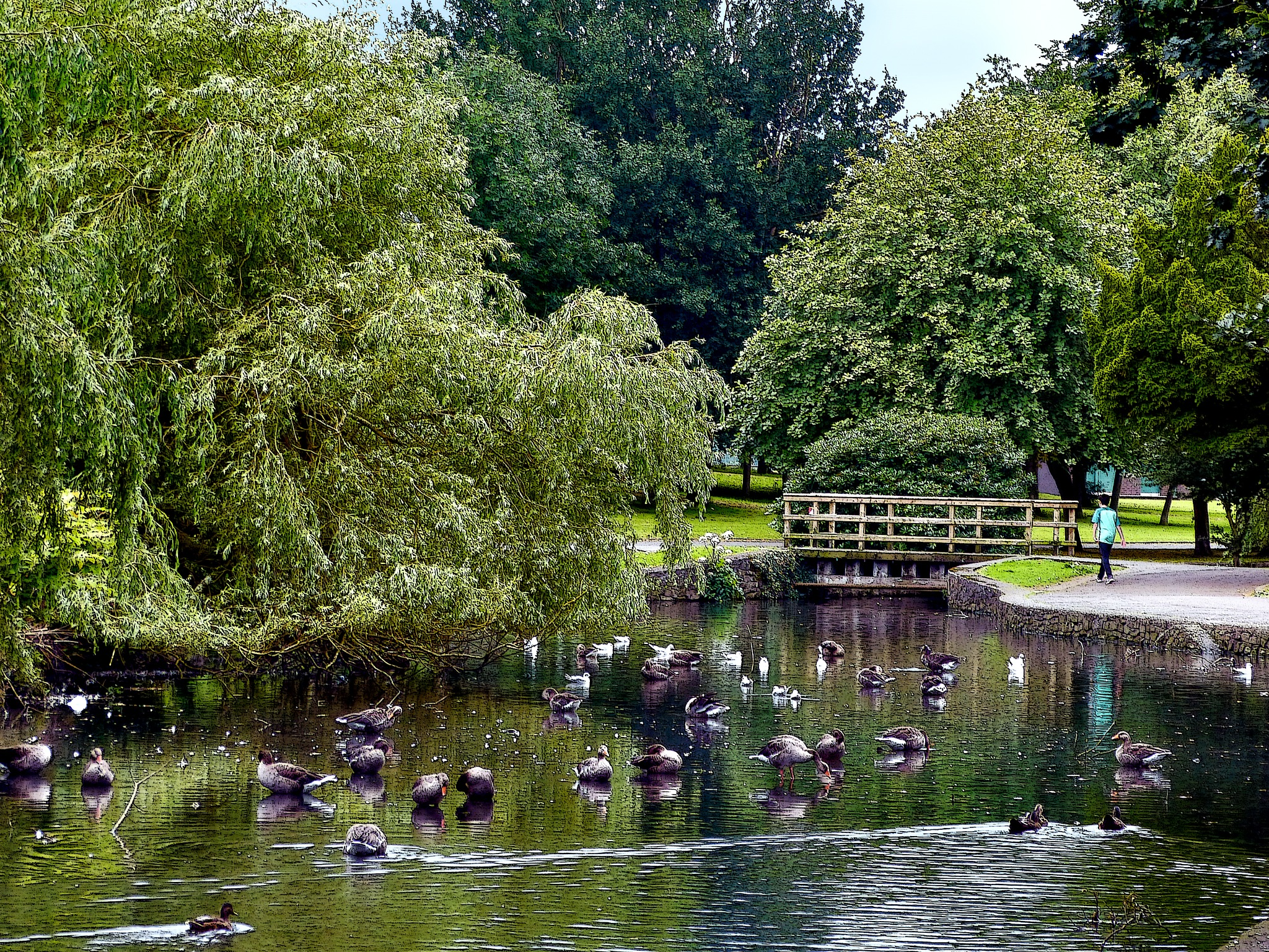 Duck Pond by PeterMChambers