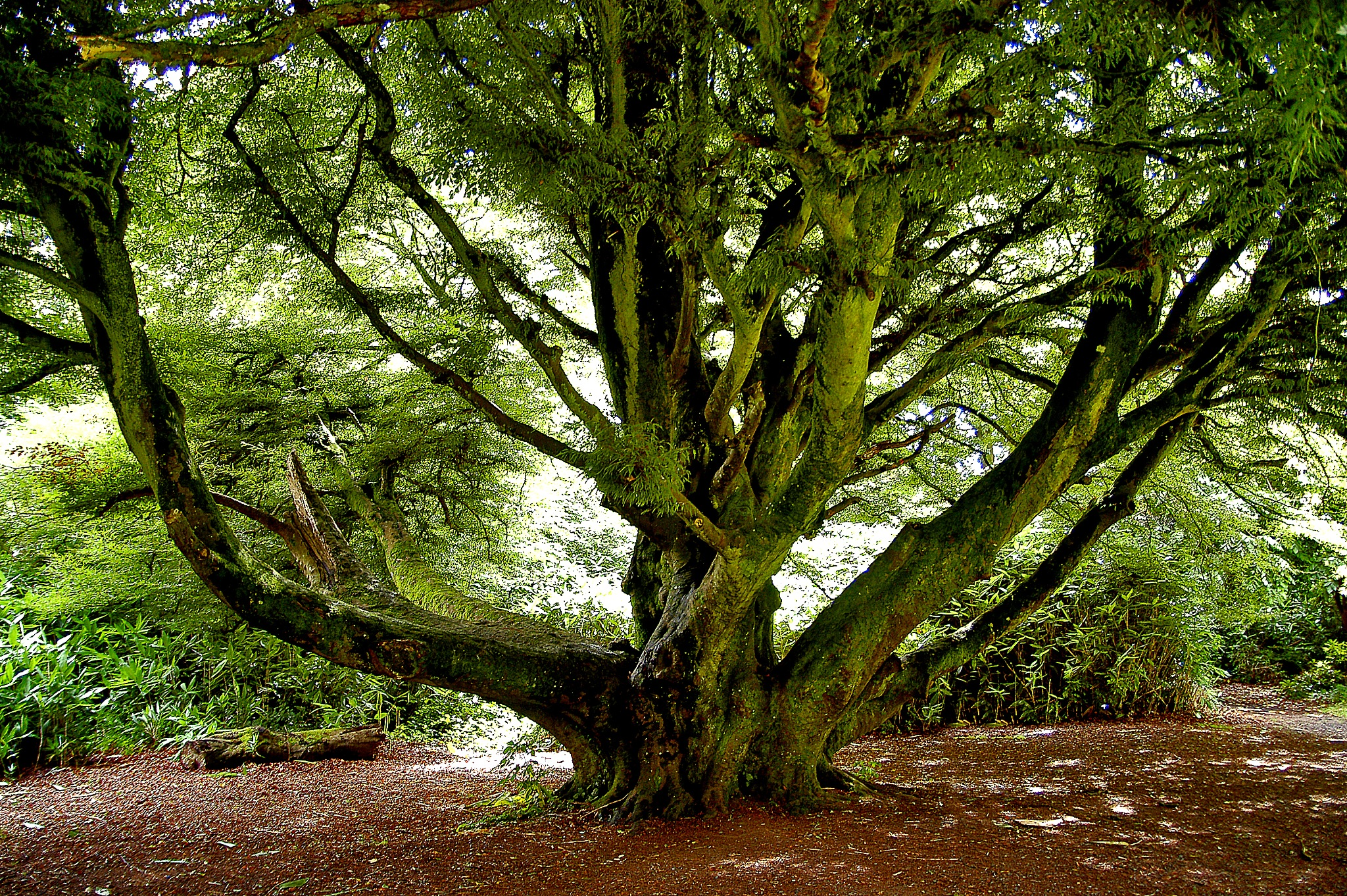 Truffle Tree  by PeterMChambers