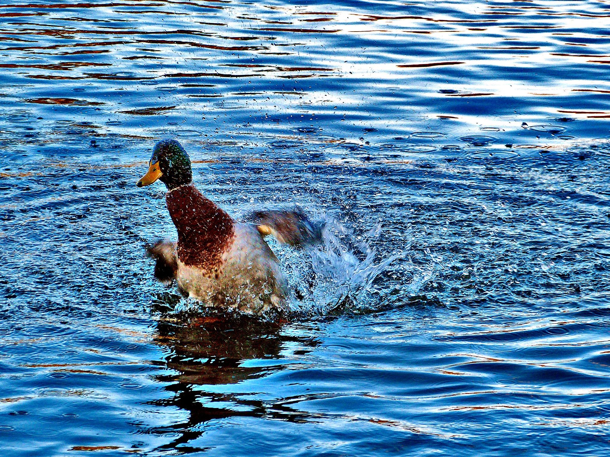 Big Splash by PeterMChambers