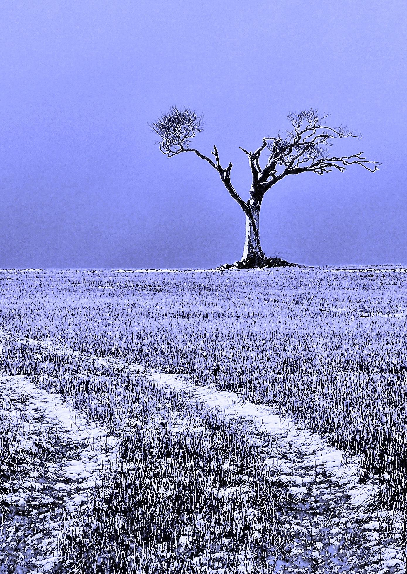 High Tree by PeterMChambers