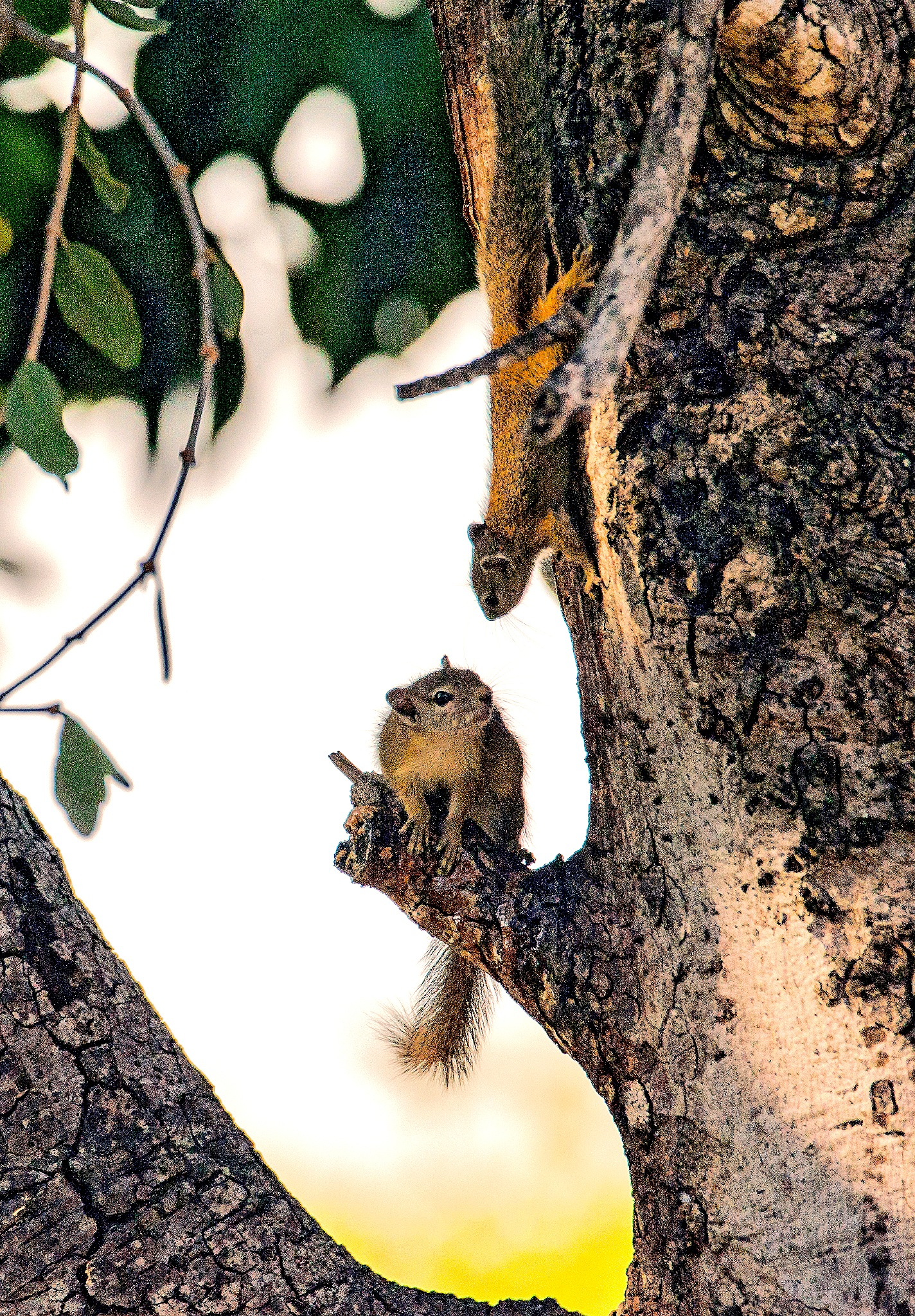 African Tree Squirrels  by PeterMChambers