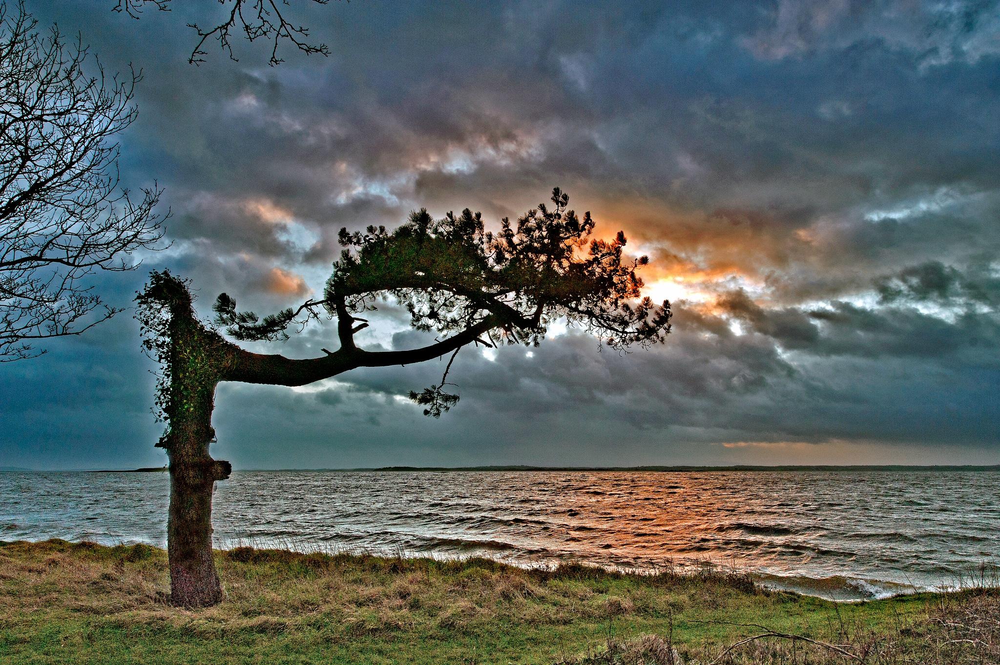 Strangford Tree by PeterMChambers