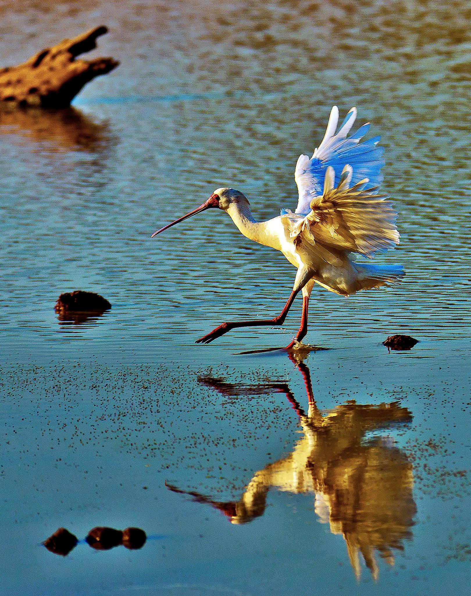 Water Walk by PeterMChambers