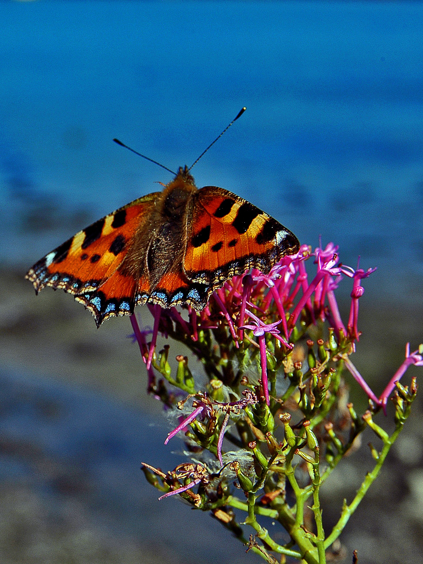 Tortoise Shell  by PeterMChambers
