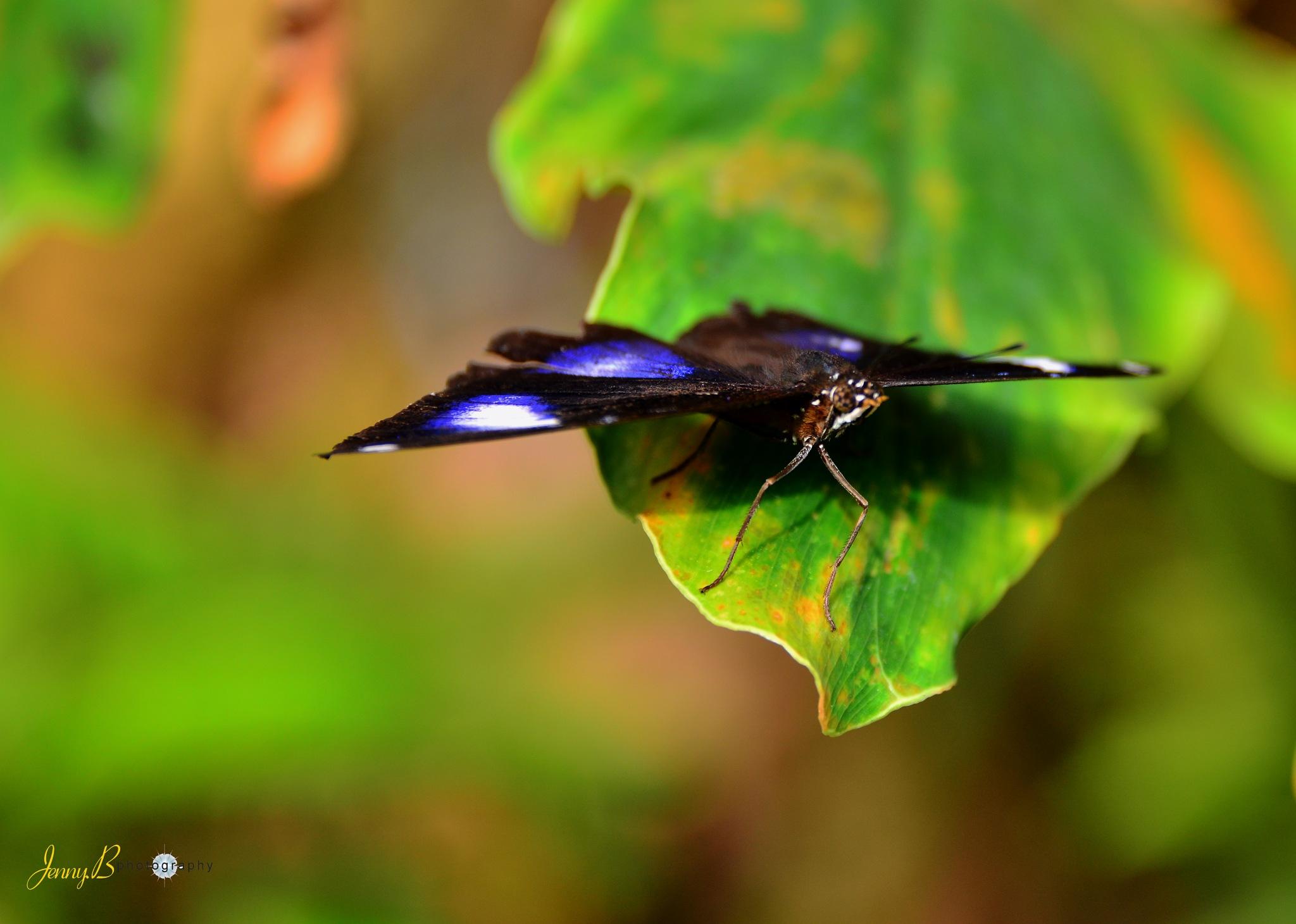 butterfly by jb_127  ( jennybphotography)