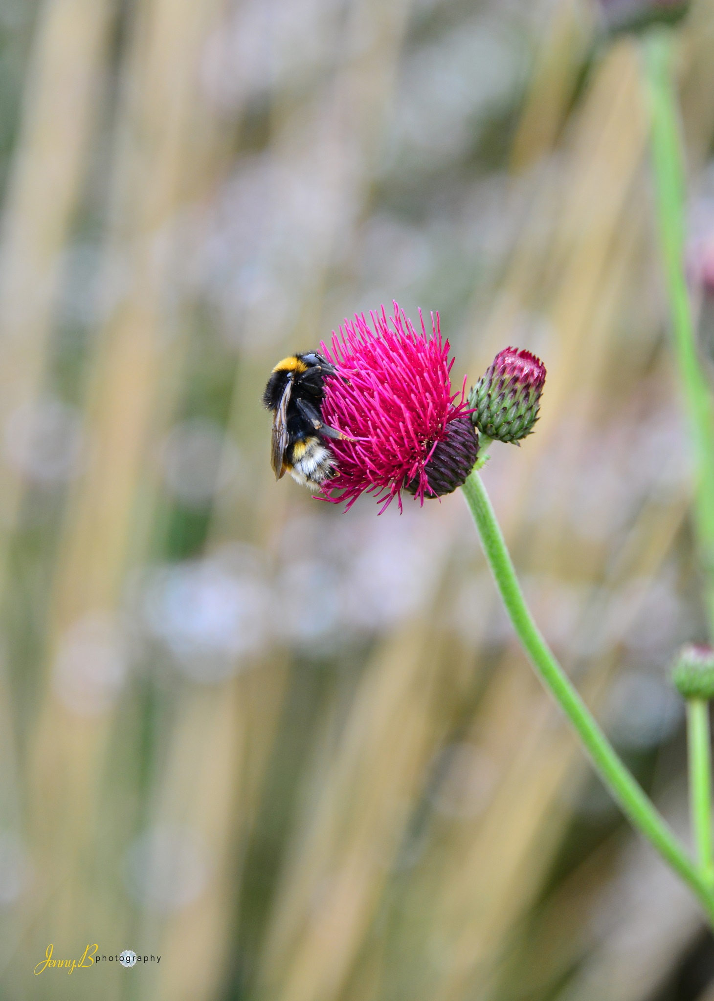Collecting Pollen by jb_127  ( jennybphotography)