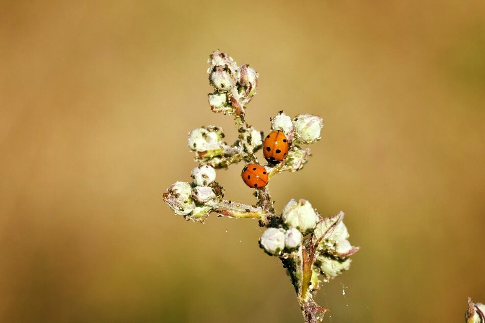 coccinelle ! by Mino Sorrenti