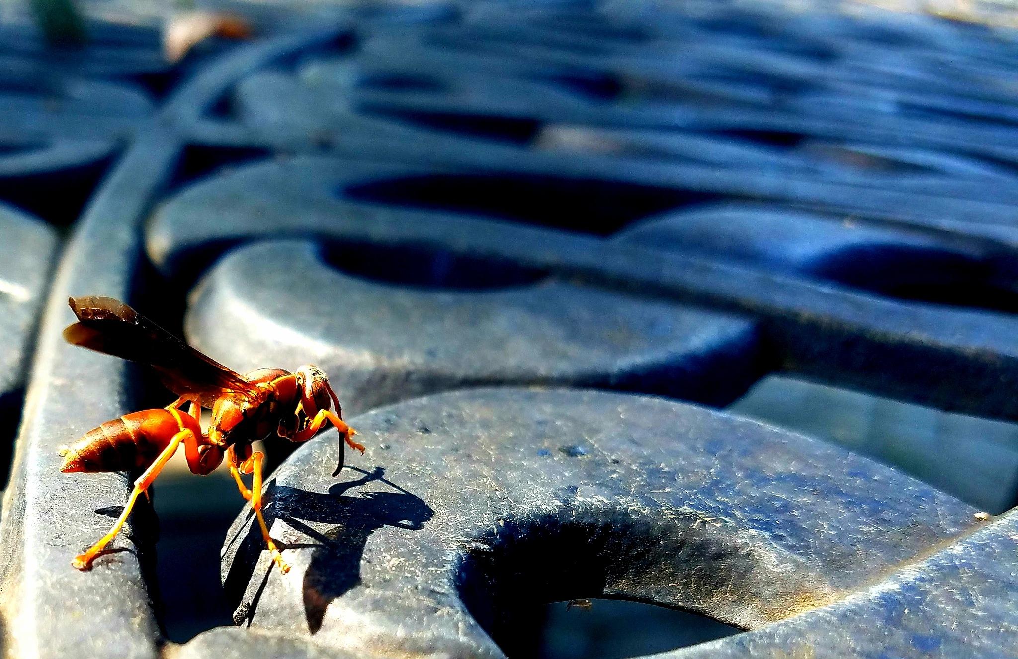 Red Wasp by Max Guzman