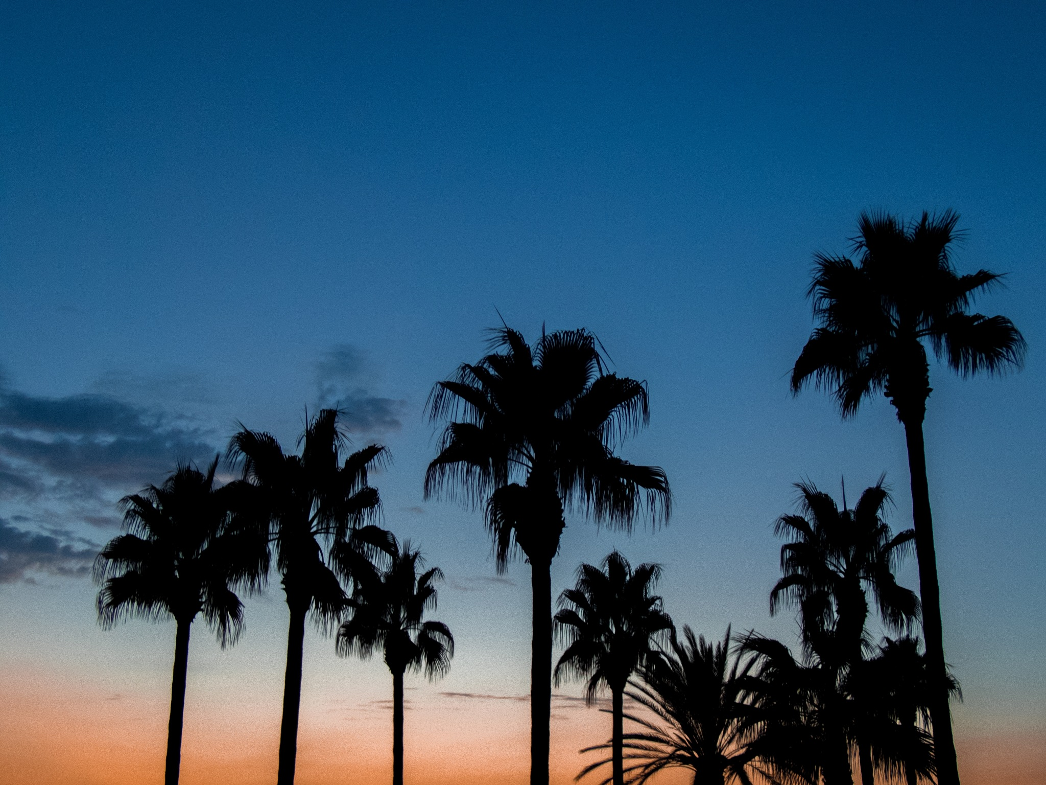 Palm Tree Skyline by Gerrit Beetstra