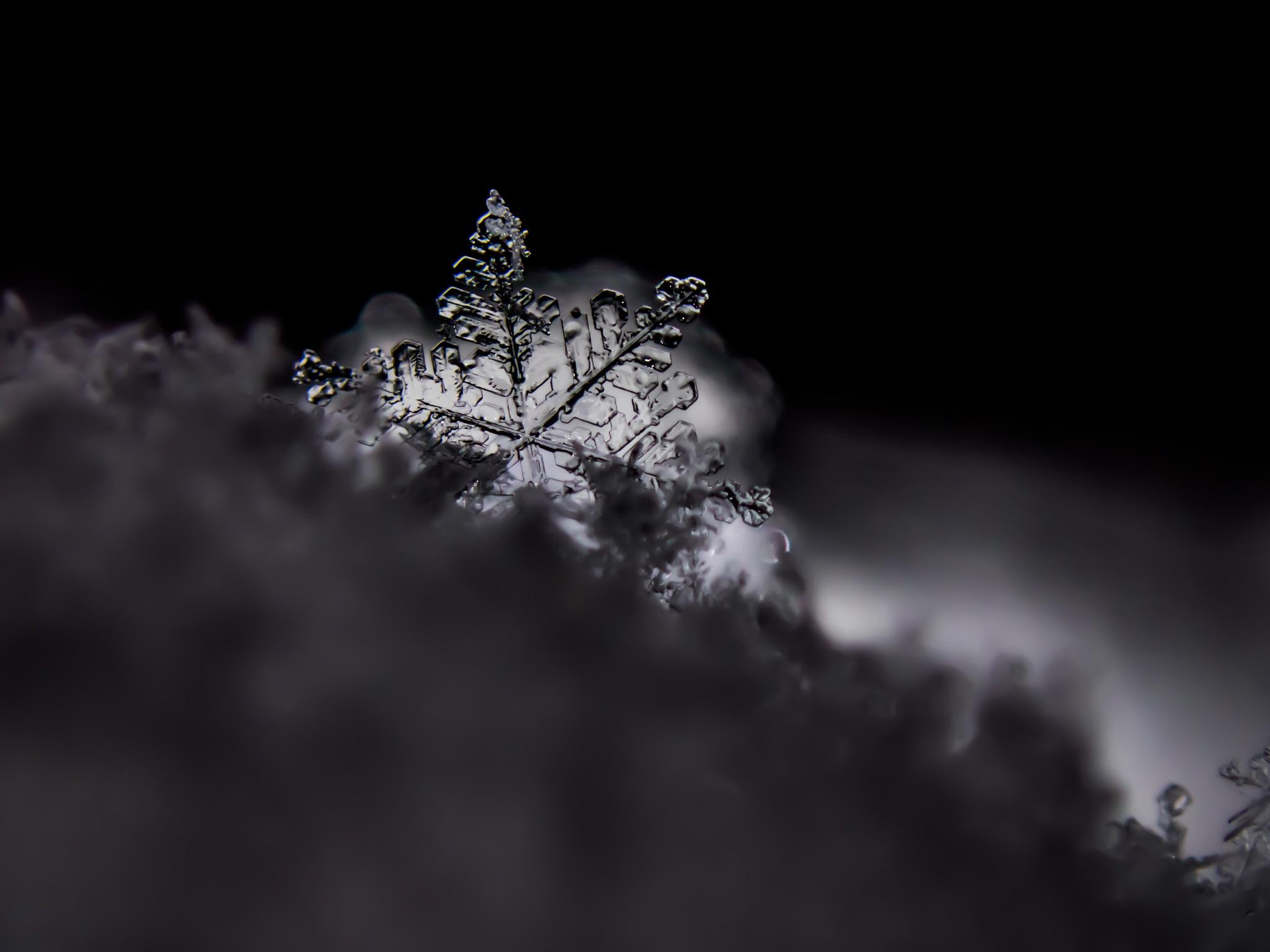 snowcrystal by Gerrit Beetstra