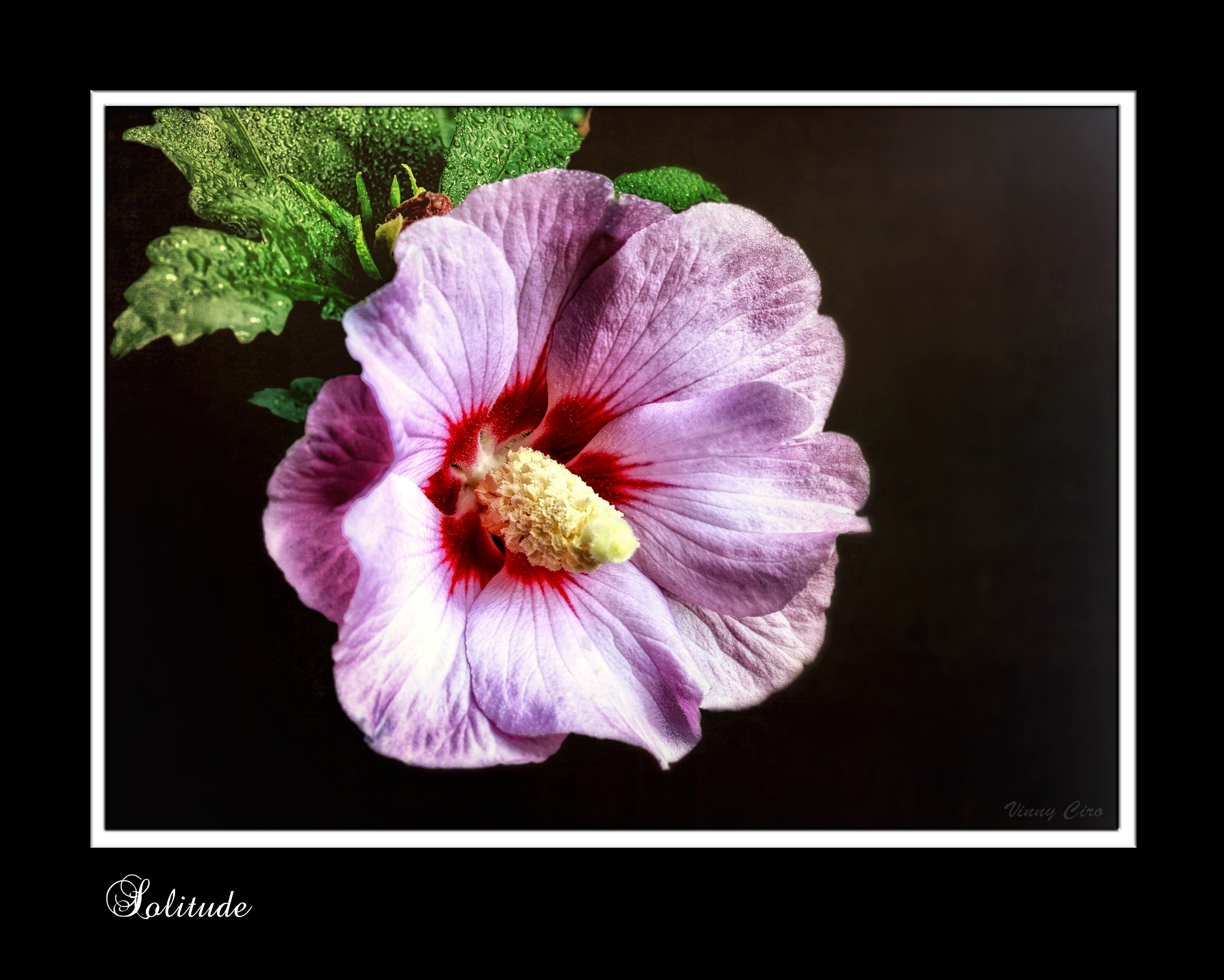 Solitude by vpciro