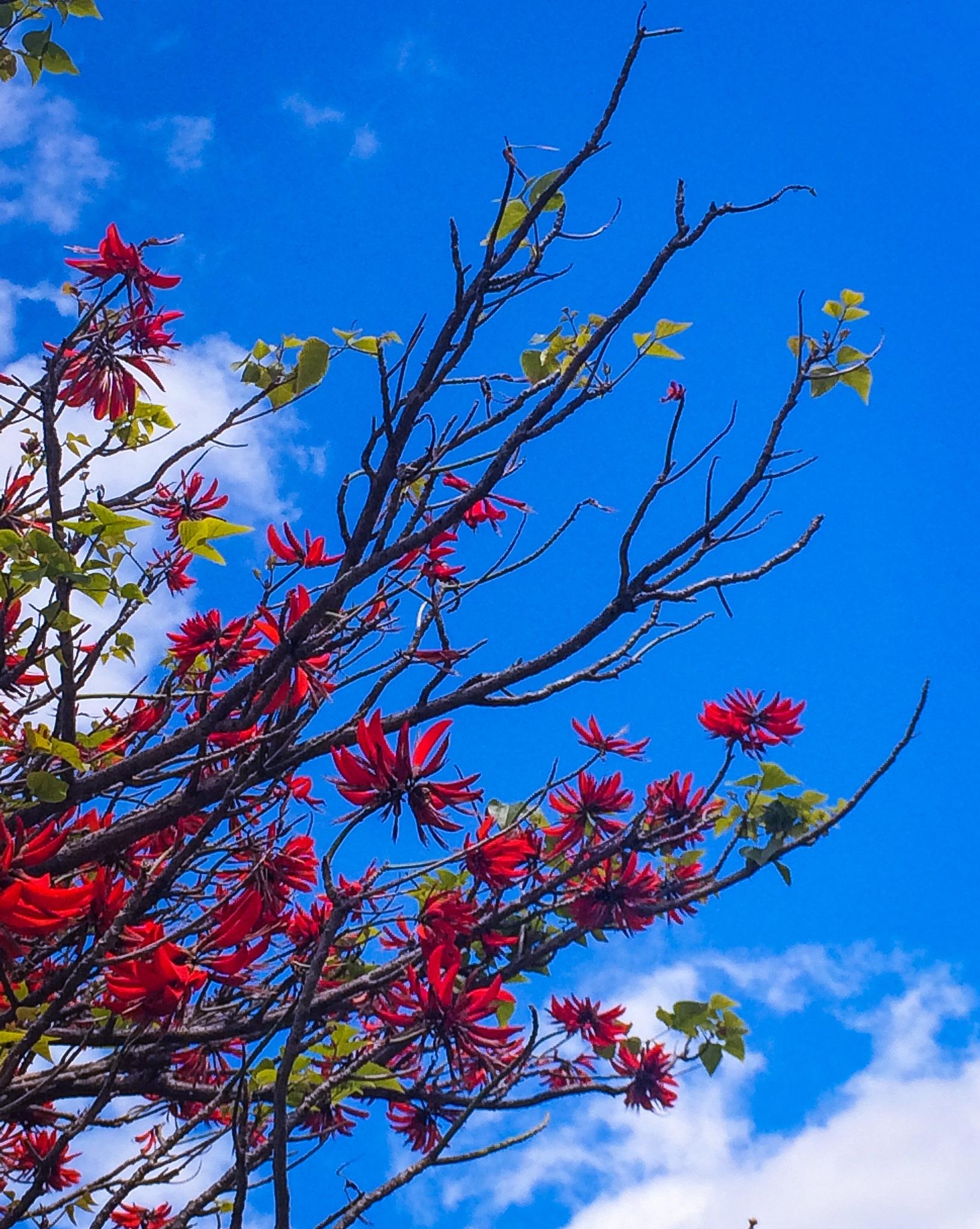 Blue sky  by Yeakuty Jhanker