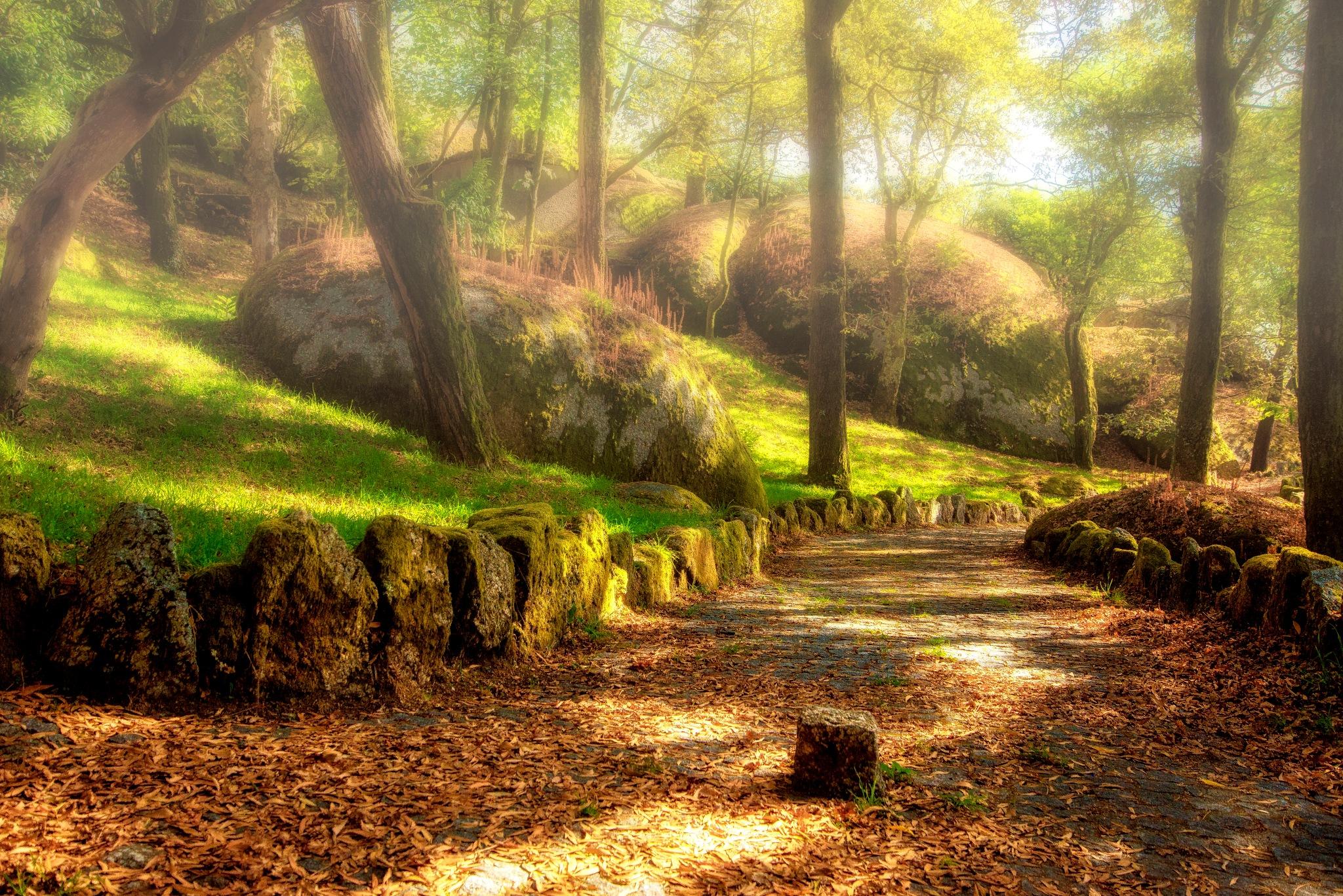 Secret path by Linette Simões