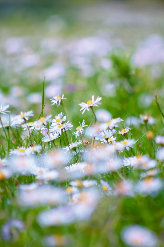 Flowers in the Garden by fedejimenez