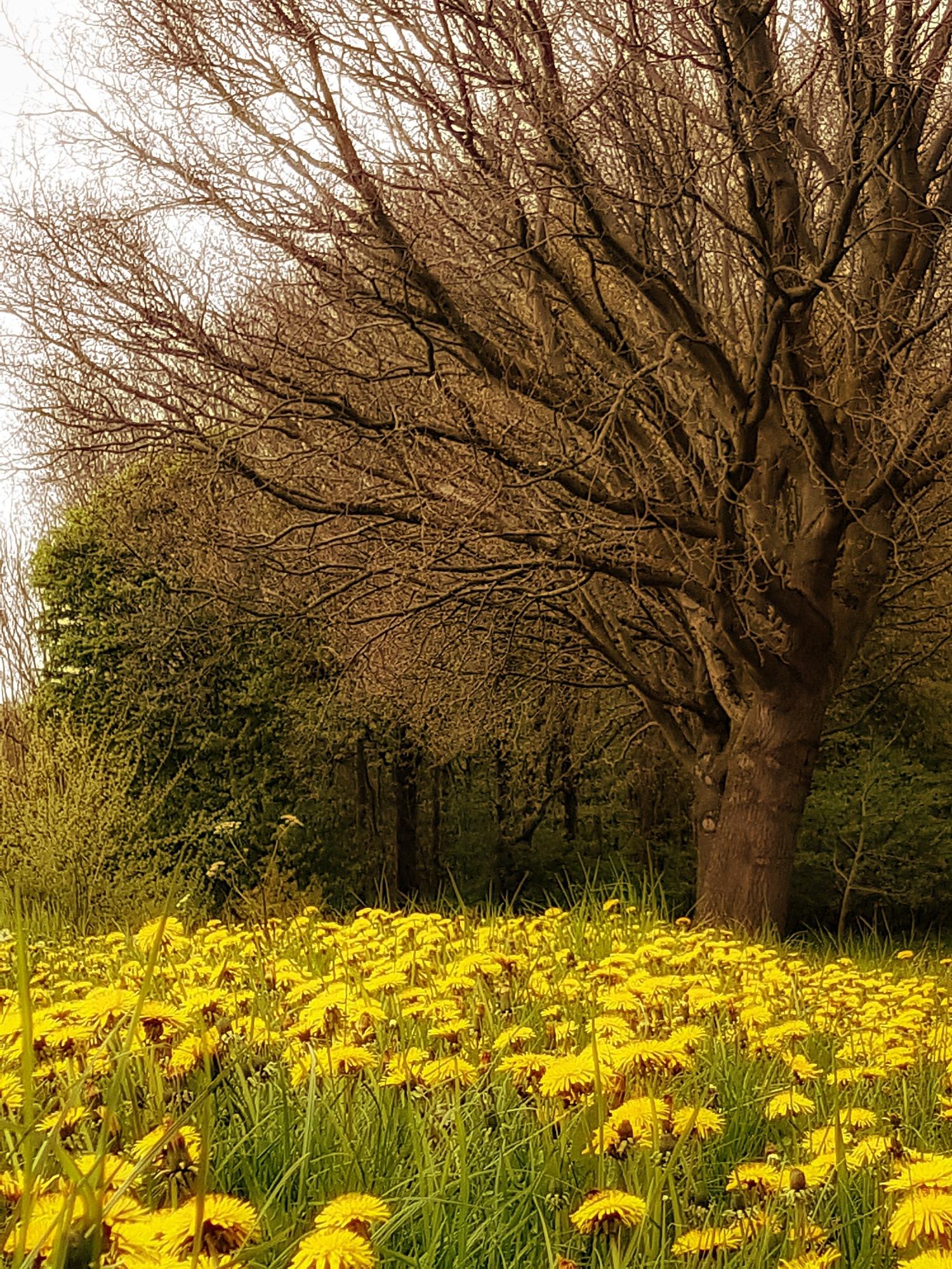 Dandelions carpet by Jannie Looge