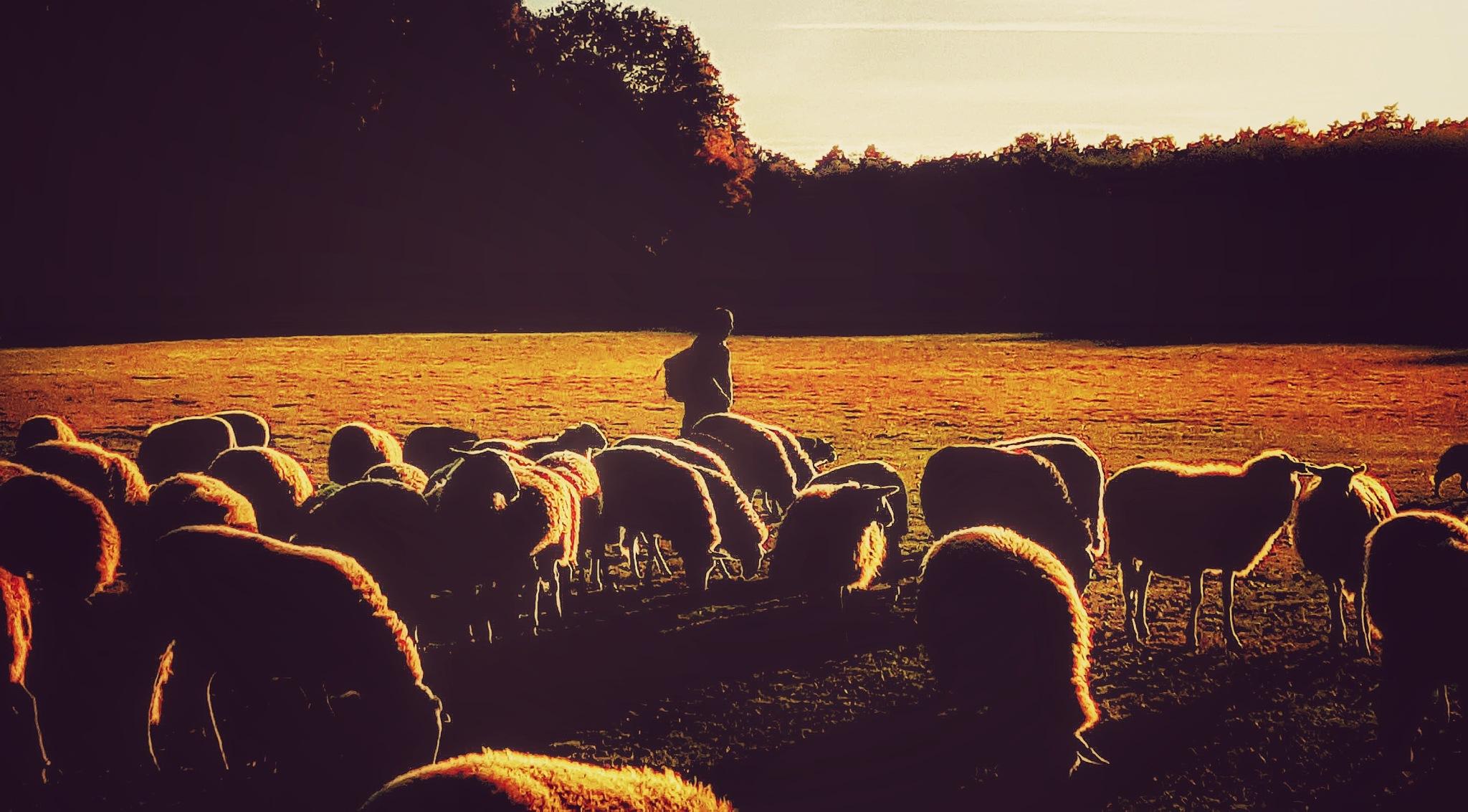 Return of the sheep by Jannie Looge