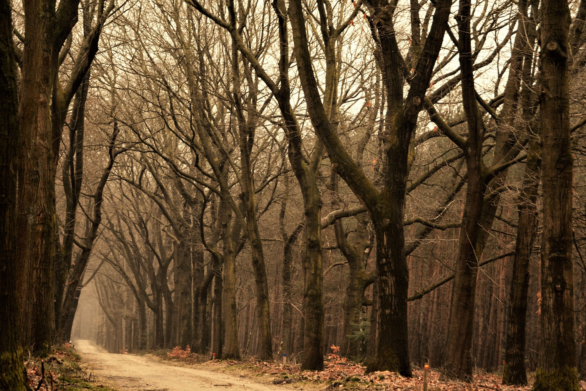 When the sun is not present the trees show their beautiful shapes. by Jannie Looge