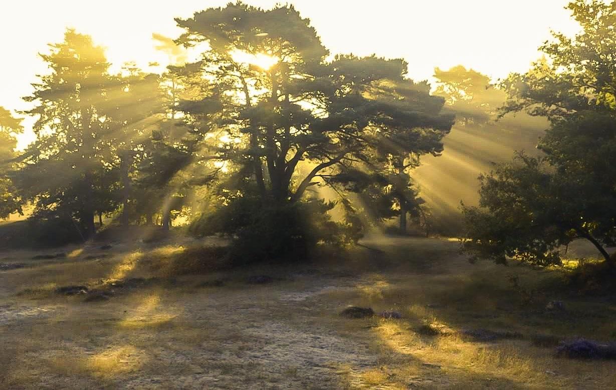 Goodmorning! by Jannie Looge